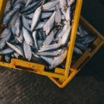 Bezpieczne ryby – dowiedz się, dlaczego należy włączyć je do jadłospisu dziecka